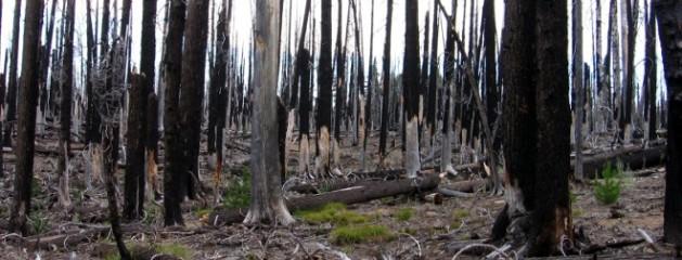 El Principado autoriza la tala de arboles para madera