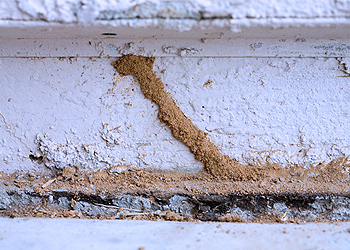 túneles de barro de termitas