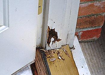termitas en el cerco de la puerta