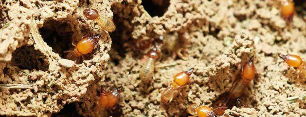 Cómo protegerse de las termitas